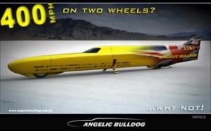 Angelic bulldog 2